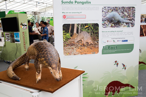 Threatened species such as the Sunda pangolin have been identified for recovery.