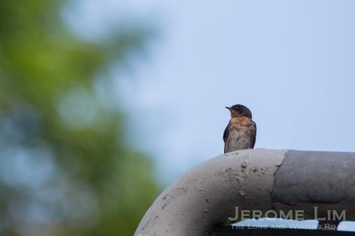 JeromeLim-3383