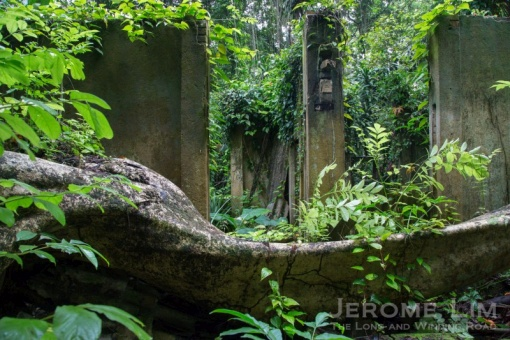 jeromelim-9900