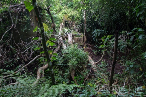 The remnants of a lost village are found in the forested area between Old Upper Thomson and Upper Thomson Roads.