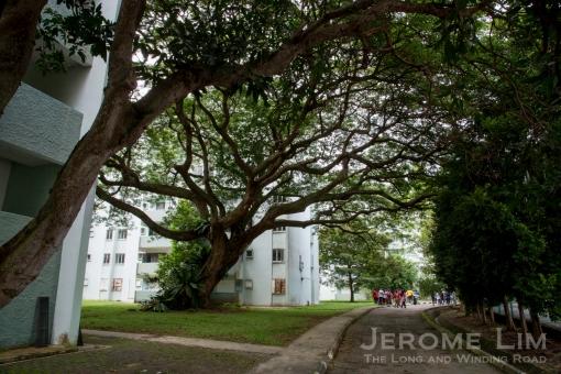 jeromelim-6551